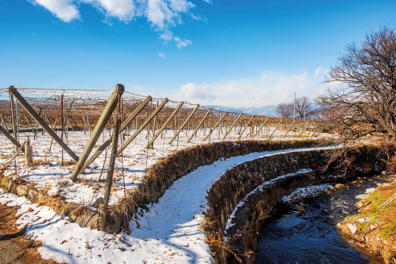 Winter view: Katsunuma Winery