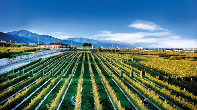 Wine Traveller: Made in Japan